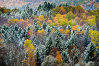 Early Snow on Tioughnioga Forest, 10/18/2015