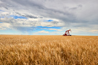 Oil Rig in Wheat Field, Saskatchewan