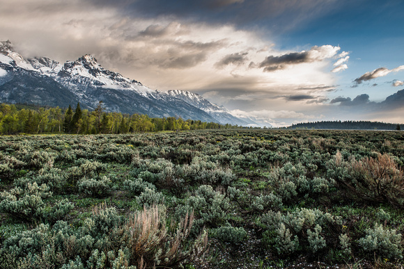 Grand Teton National Park, May