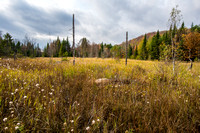 Stillwater Reservoir Marsh, Adirondacks