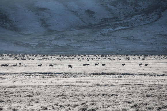 National Elk Refuge, Jackson, Wyoming